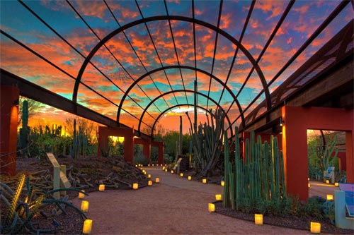 desert botanical gardens luminaries